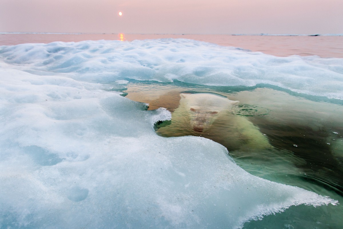 The Ice Bear, Churchill, Manitoba, Canada